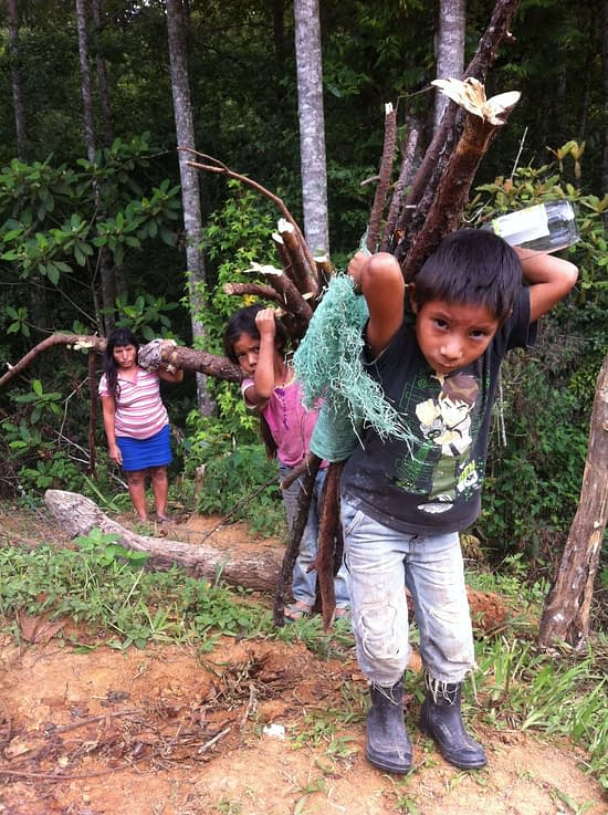Honduras Boy Gathering Wood for stove in