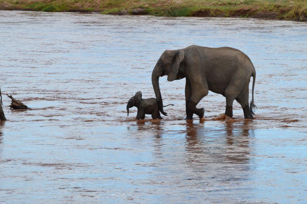 Samburu National Reserve elephant calf