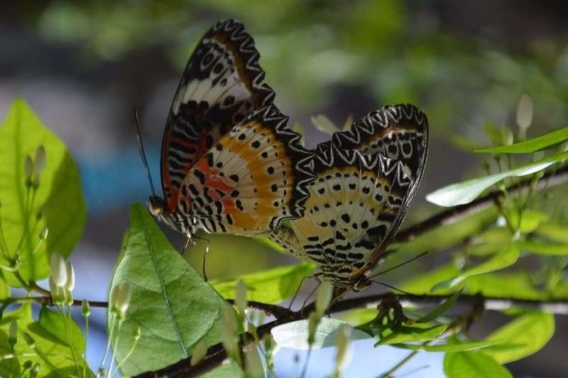 Entopia Penang Butterfly Farm 7