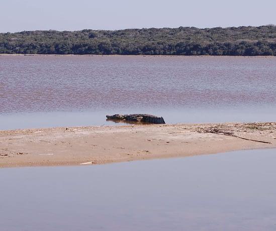 Crocodile Lagoa Chingute - Maputo Elephant Reserve