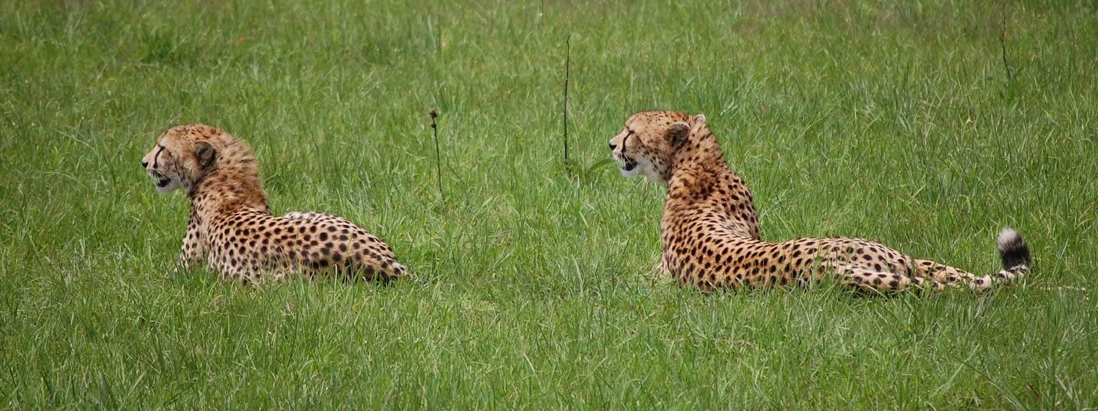 Maasai Mara Safari Kenya