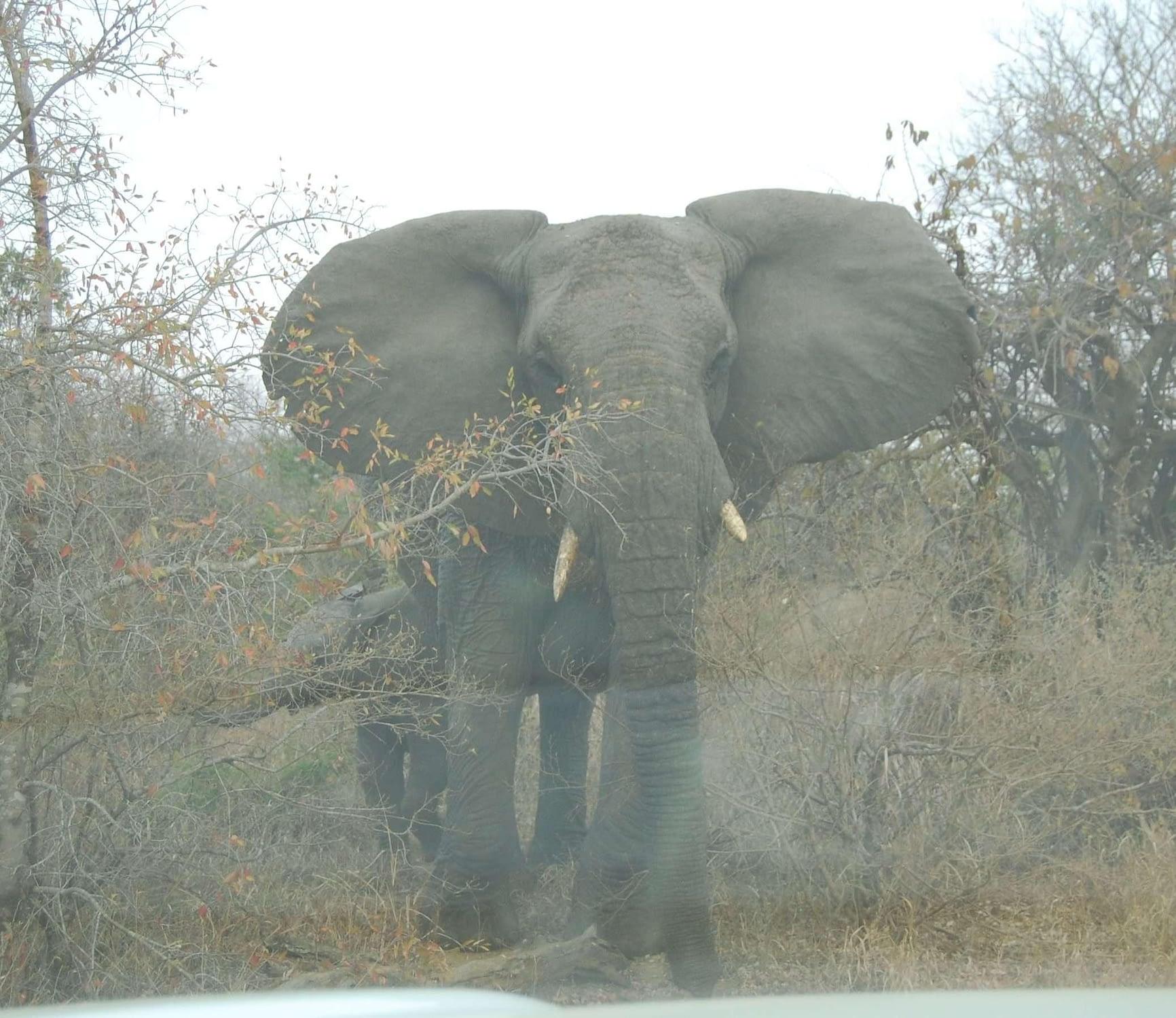 photo elephant with small calf hluhluwe-Imfolozi park