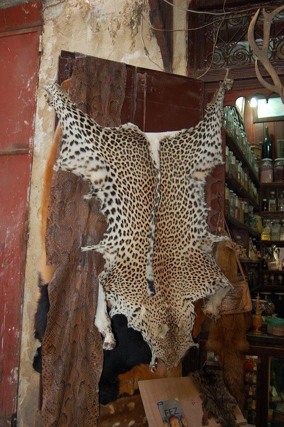 Leopard Skin Rug Medina of Fez