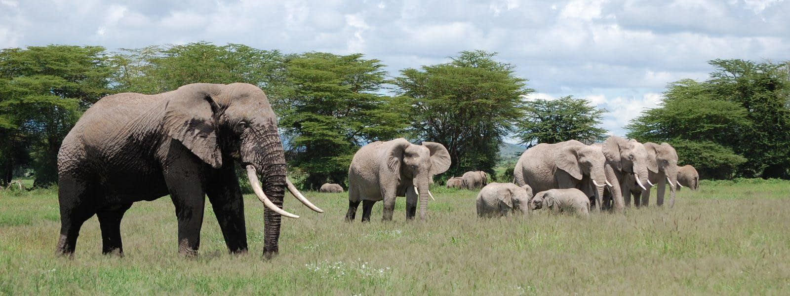 Amboseli National Reserve Safari