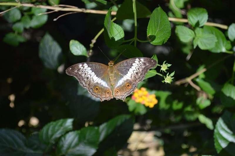 Entopia Penang Butterfly Farm 4