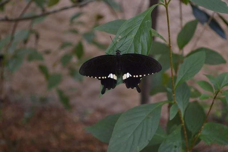 Entopia Penang Butterfly Farm 5