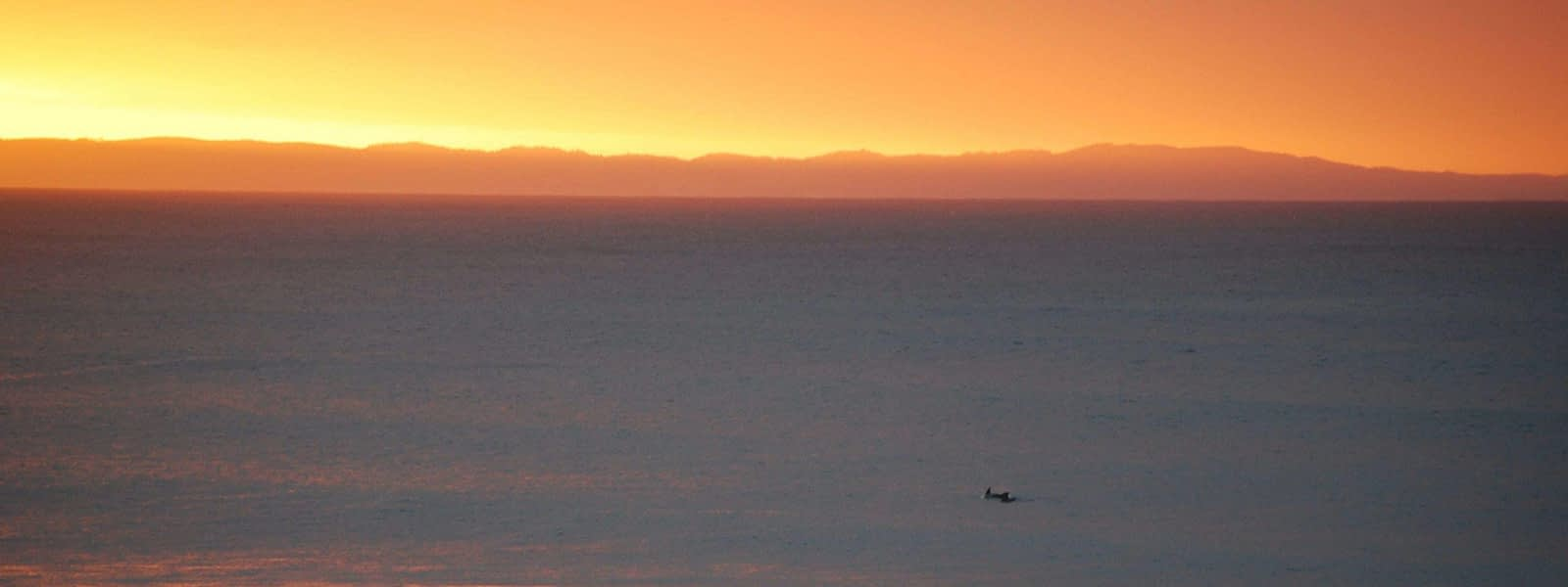 dolphins at sunrise jeffery's bay south africa