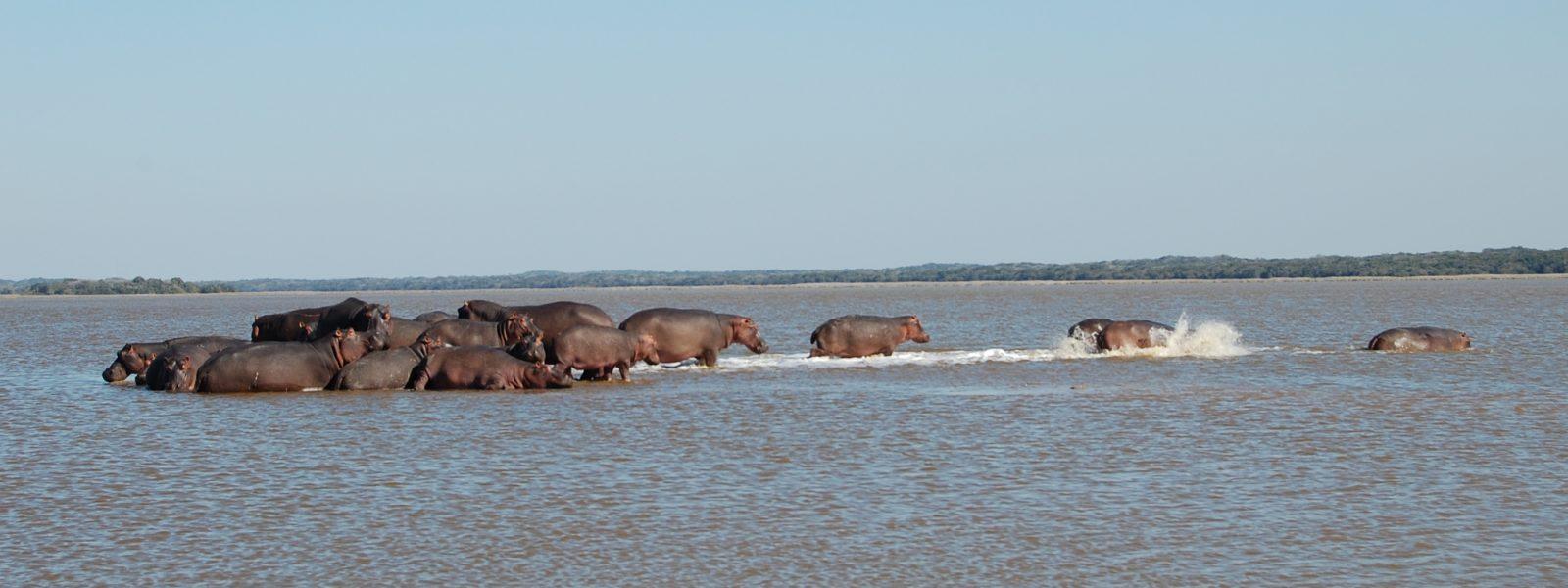 Maputo Elephant Reserve