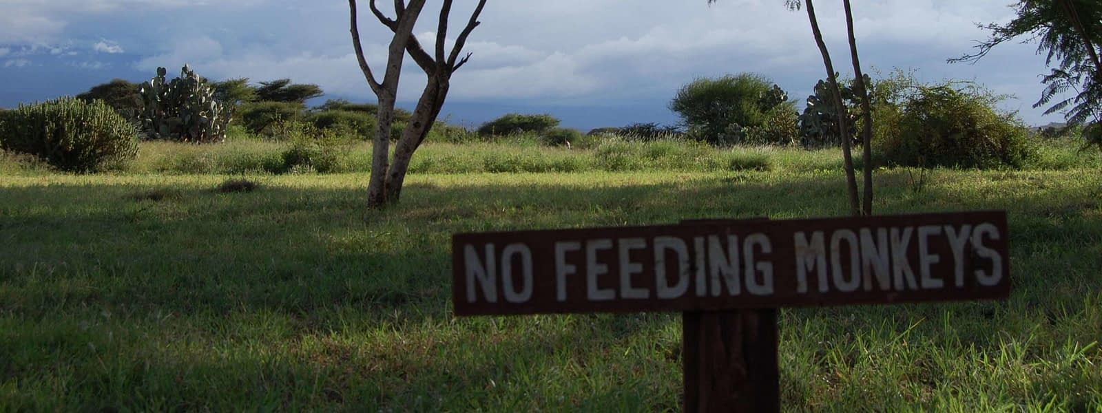 review amboseli sopa lodge