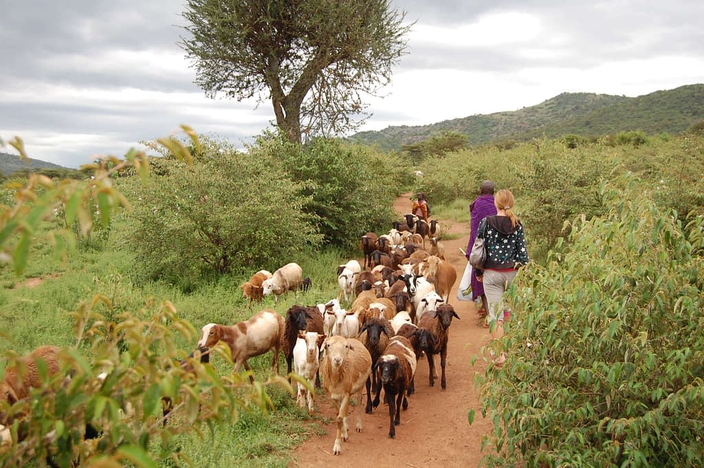 Photo of trail back to the lodge from the Maasai Village