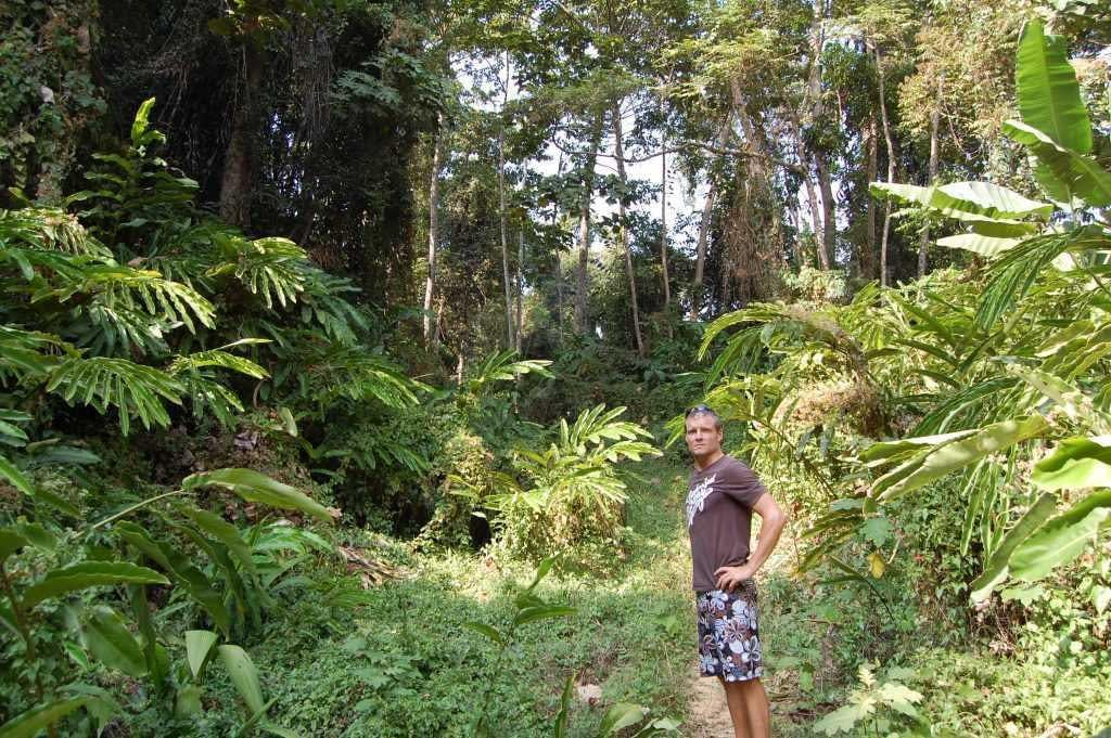 Cardamom mountain jungle