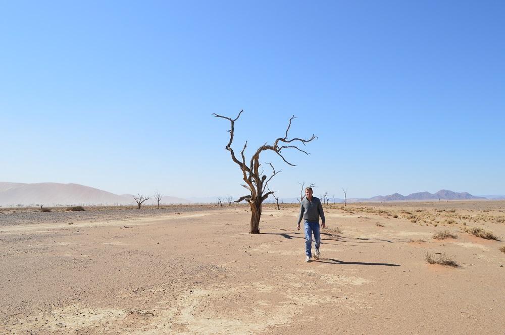 Dead Camel Thorn Tree