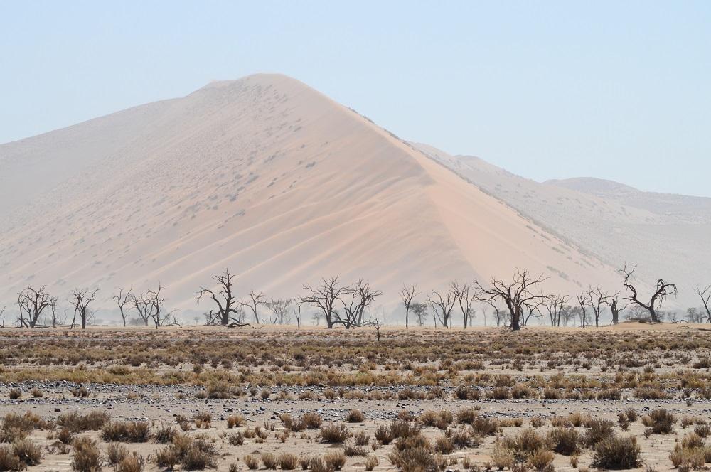 Camel Thorn Trees at Sossusvlei National Park
