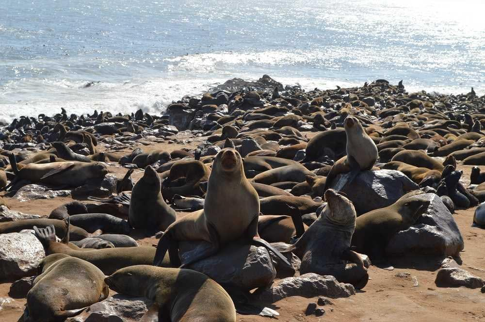 Cape Cross Seal Reserve Best Outdoor Travel Adventures