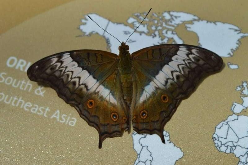 Entopia Penang Butterfly Farm 9