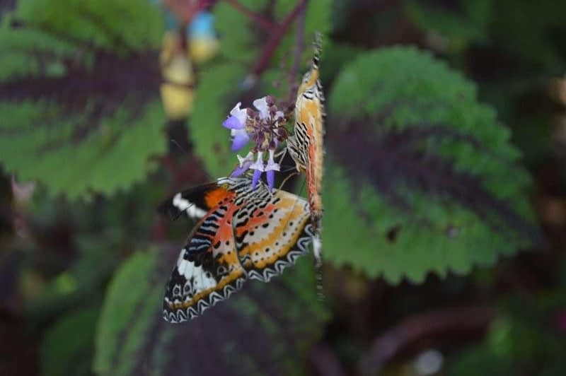 Entopia Penang Butterfly Farm 3