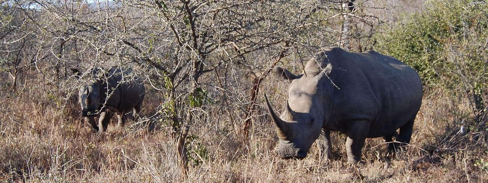 Photo white rhino Hluhluwe - Imfolozi Park