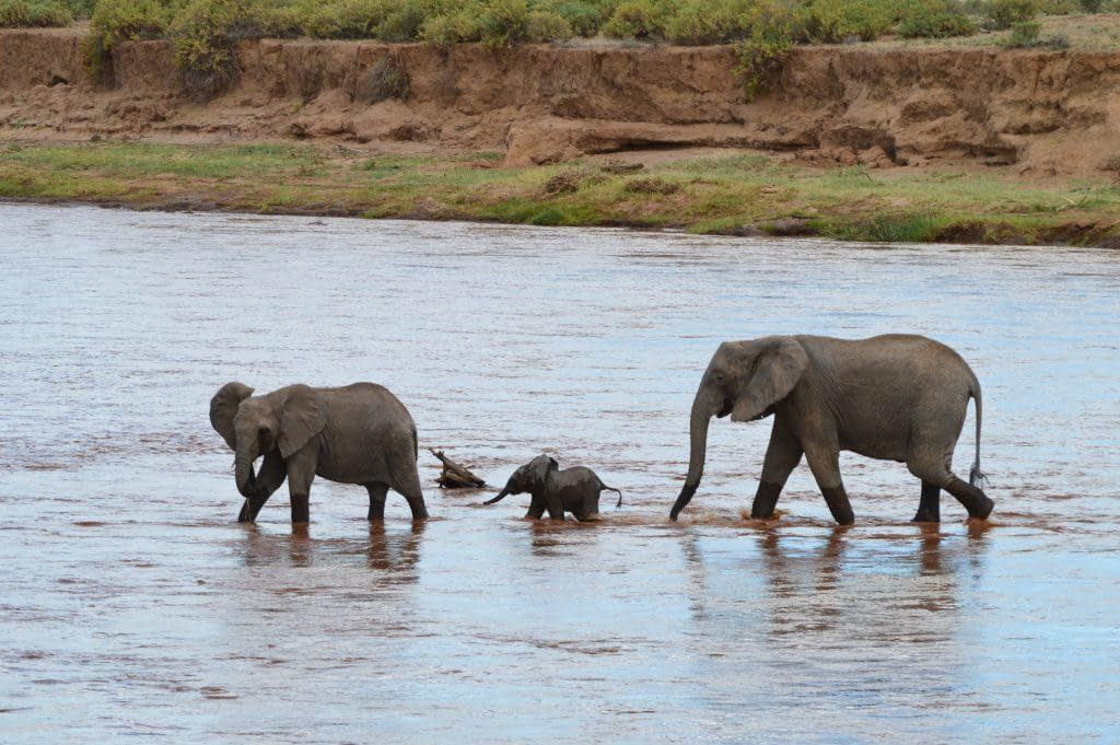 elephant calf Samburu National Reserve