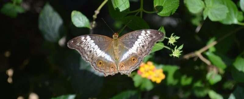Entopia Will Give You Lots of Butterflies